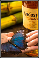 Angostura Butterfly House