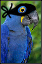 """Just who is that masked macaw?"""